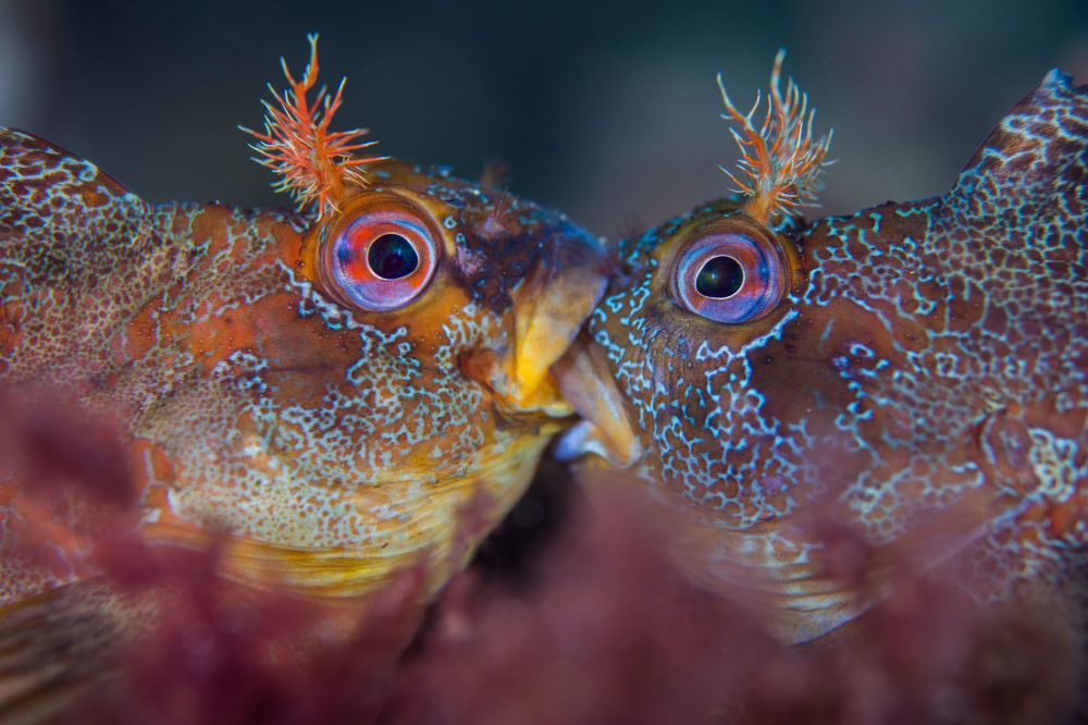 The Best from Underwater Photographer of the Year 2018