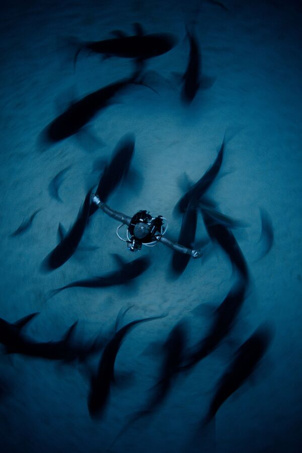 The Best from Underwater Photographer of the Year 2018 - Sputnik Латвия